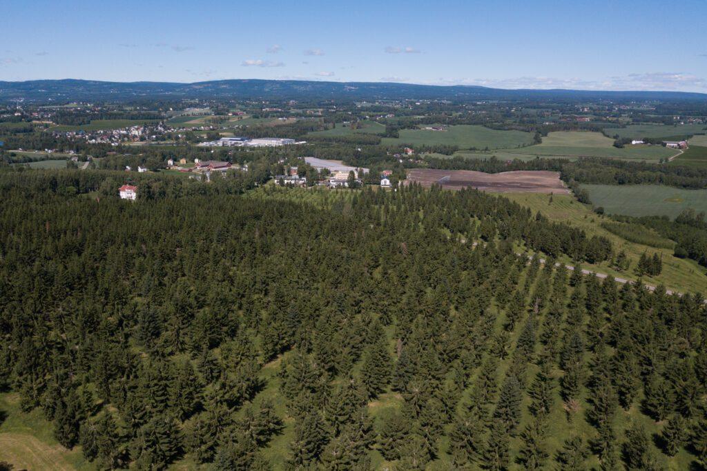 Dronebilde frøplantasje